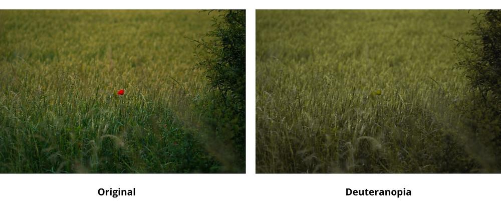 Deuteranomaly / Deuteranopia color blindness example
