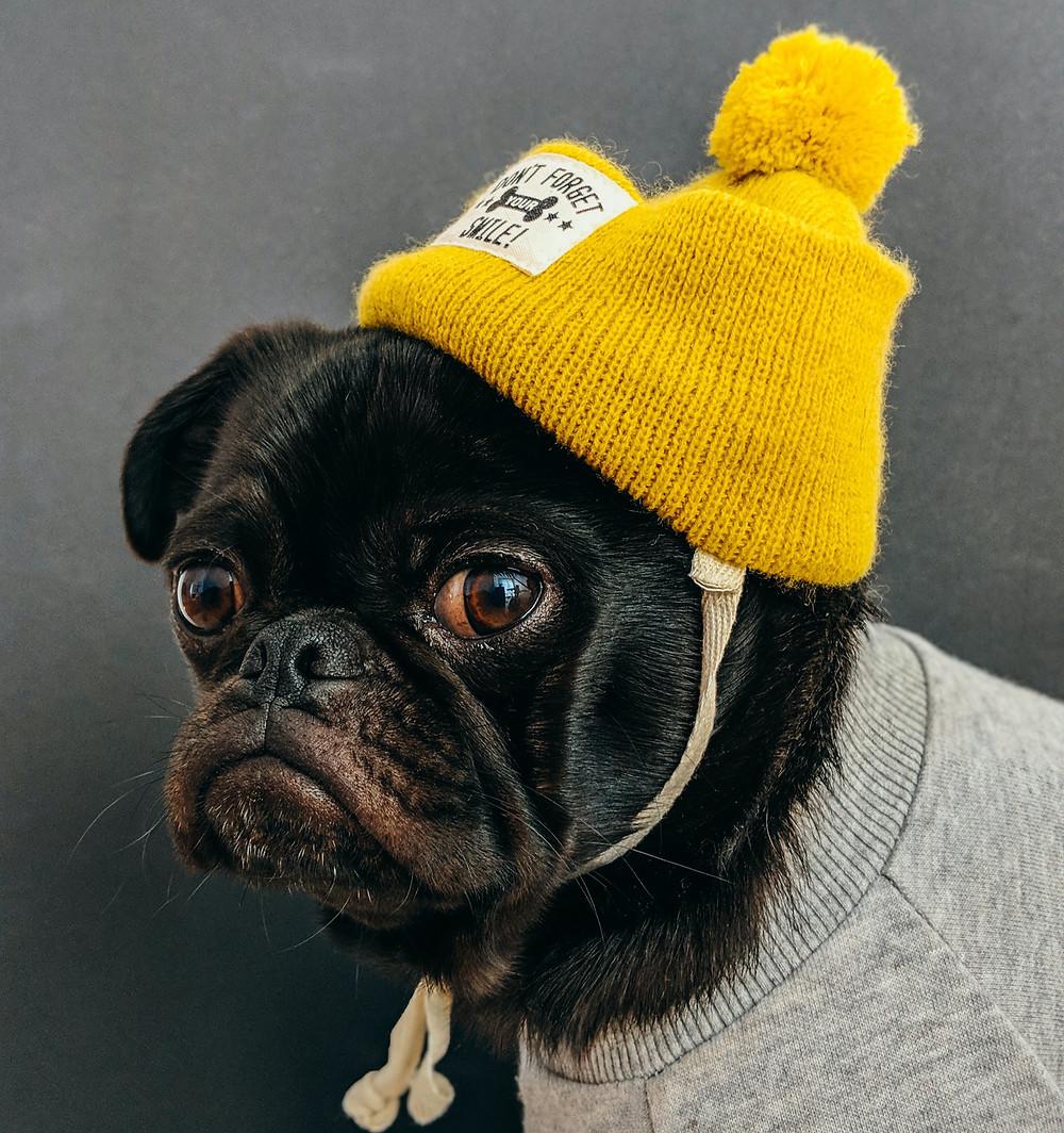Dog wearing a beanie