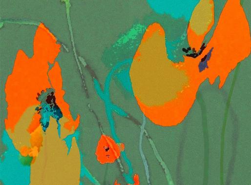Poppies - Mohnblumen