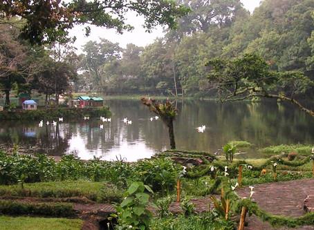 Coffee Origins - Nicaragua La Hammonia Selva Negra