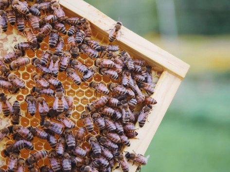Our Bees Are Famous!