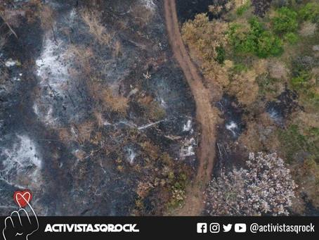 La ganadería principal causa de la destrucción del Amazonas: ¡No te comas el Amazonas!