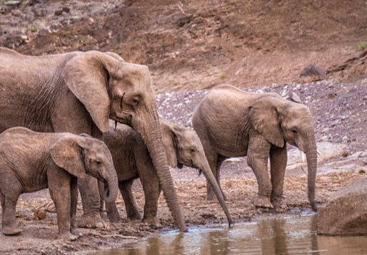 Wildlife tourism in southern Africa uses scarce water – Proposal on how much is enough
