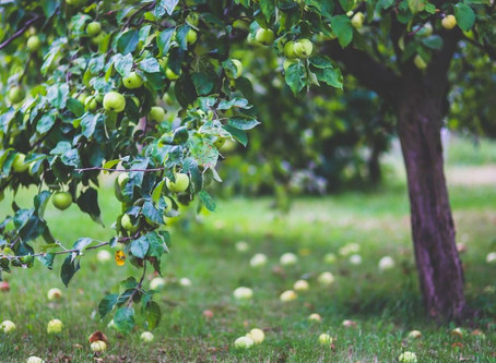 How To Plant Trees On Your Homestead