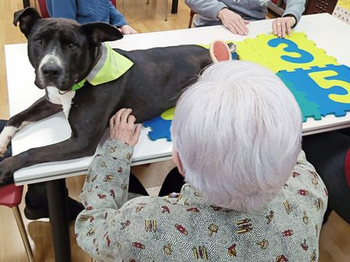 Terapia Asistida con Perros en Personas de la Tercera Edad