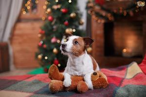 Кучето игра со плишаното мече од бебето во дневната соба покрај елката
