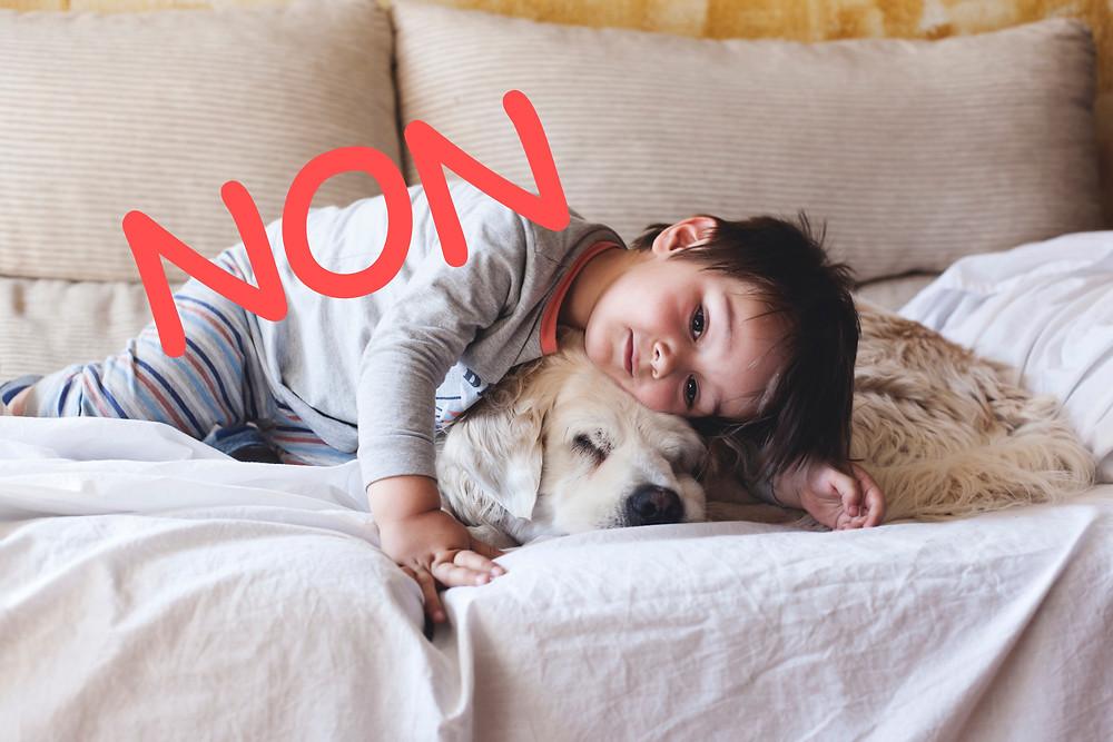 Danger enfant chien