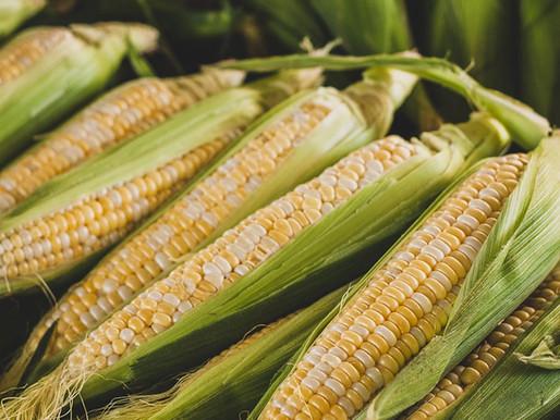 "Corn ""Épluchette"""