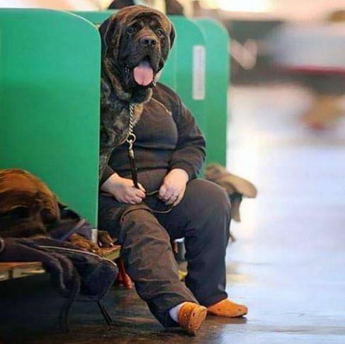 Funny Dog Photos Accidentally Caught On Cameras