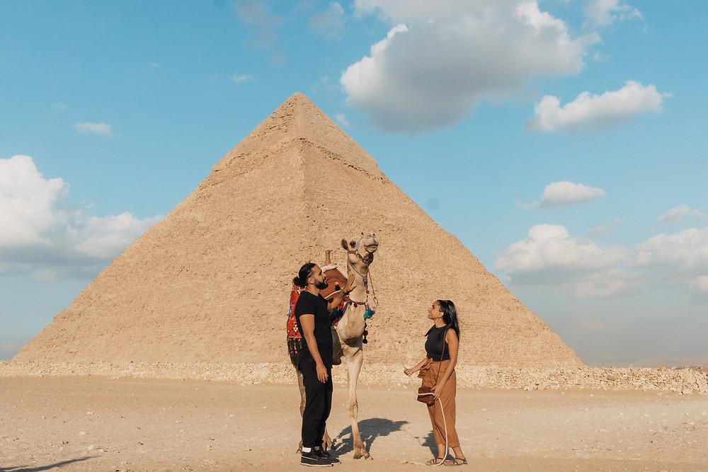 camel pyramid giza egypt cairo travel