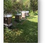 Consrvancy bees.jpg