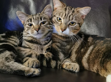 Cat Allergies not an Issue for Hope and Tigger's new Family!