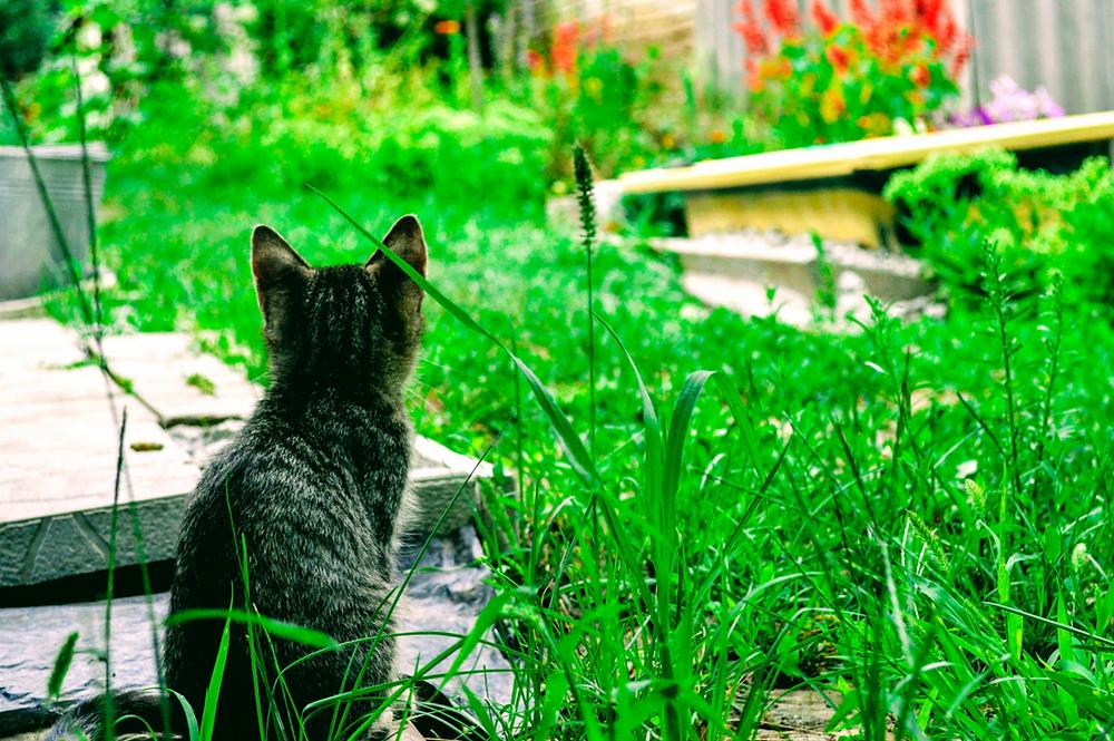 Cat in Backyard