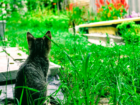 Seven Tips for Environmentally Friendly Lawn Care