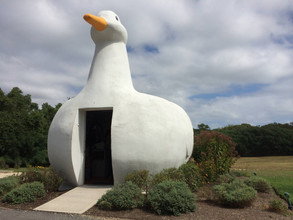 """La teoria del """"Edificio Pato"""""""
