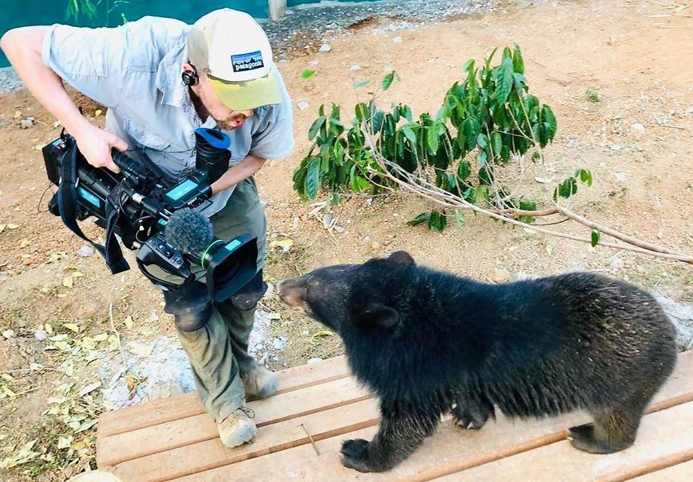 Filming a moon bear