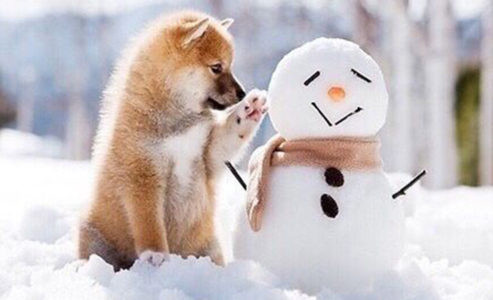Caring for Your Dog During Winter - Petdiary Dog Training Collars