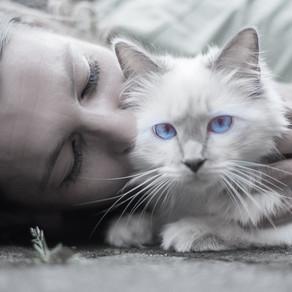 Кошка - индикатор благополучия