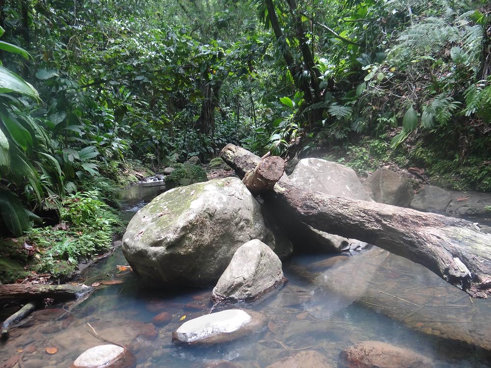 Guadeloupe sentier randonnée de la cascade tambour