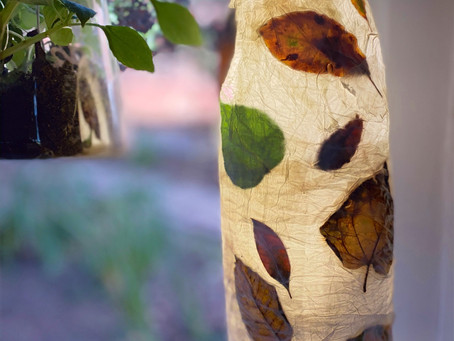 Make an autumn leaf lantern