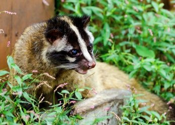 Image Source: Animalia.bio