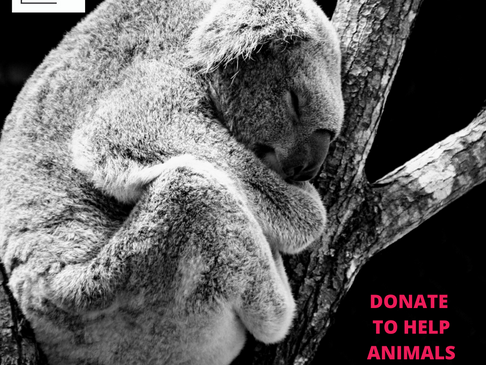 Where to DONATE to help animals during Australian bushfires