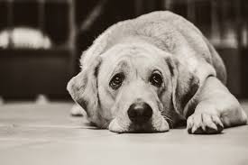 Helping Ease Separation Anxiety in Dogs - Petdiary Dog Training Collars