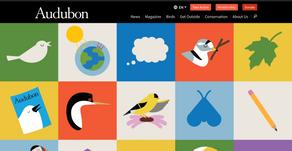 Audubon for Kids! (audubon.org)