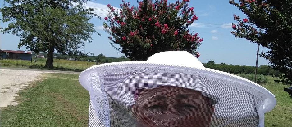Adventures in Beekeeping