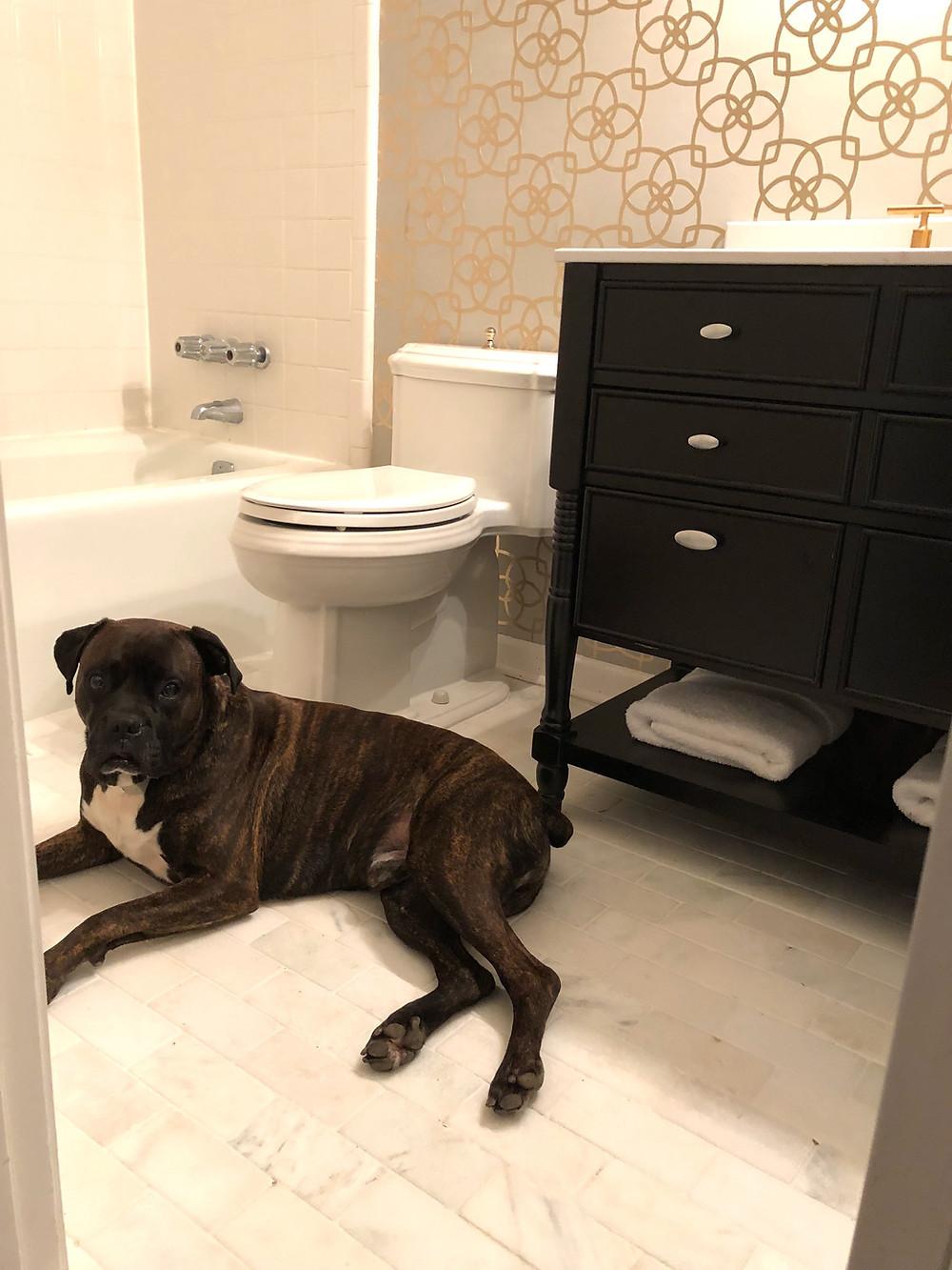 Boxer dog new bathroom makeover Miseno vanity kohler faucet