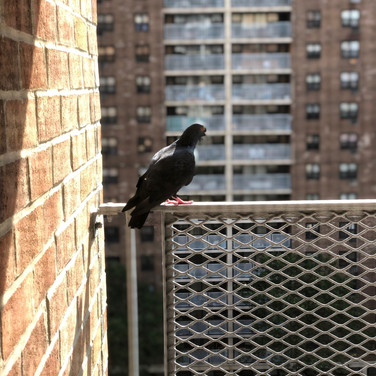 QUENTIN, The Guardian of his balcony