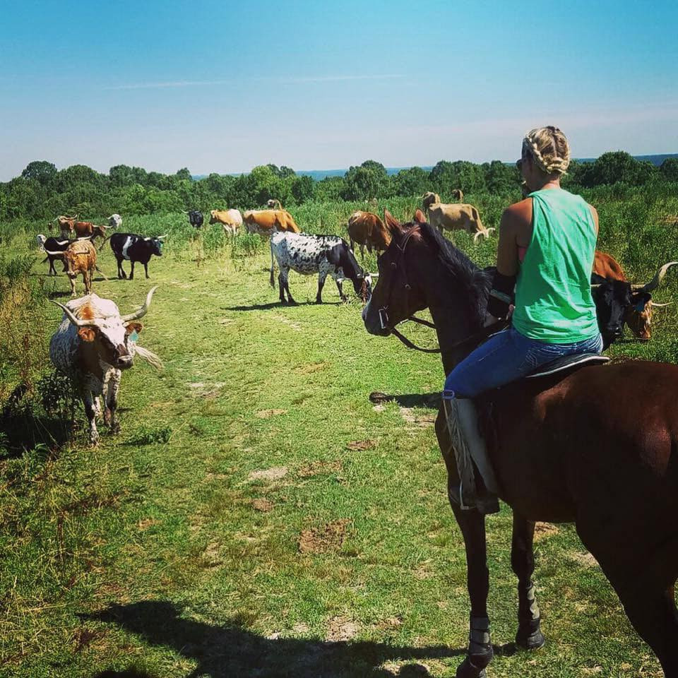 Racehorses being trained on the trail for balancing and conditioning. Ashley Massengale of Beyond the Rail