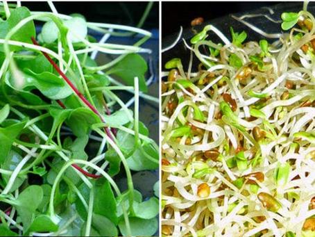 Diferença entre Broto e Microgreens