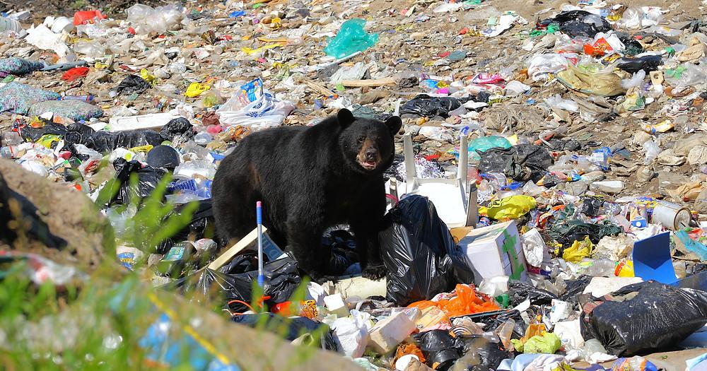 déchet plastique , ordures , sac plastique ,