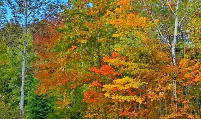 Fall Foliage-Central Maine