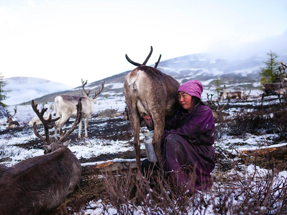 Nouvelles des Horizons - Mongolie - 2019