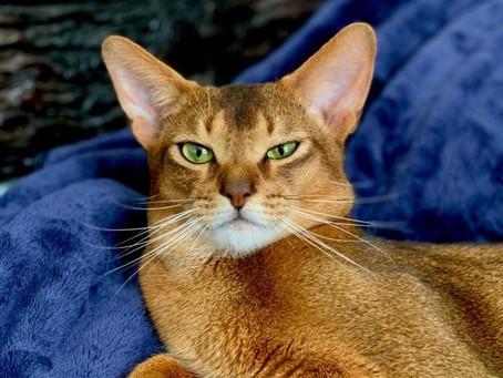 GAUTENG TOP CAT 17th August 2019