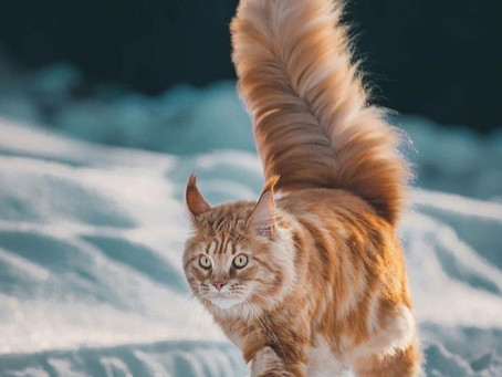 Legendary Cat