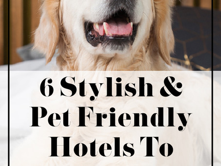 6 Stylish & Pet Friendly Hotels to Stay In Philadelphia