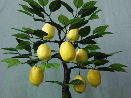 Se vendre, ou : ce que m'apprend le citronnier nain