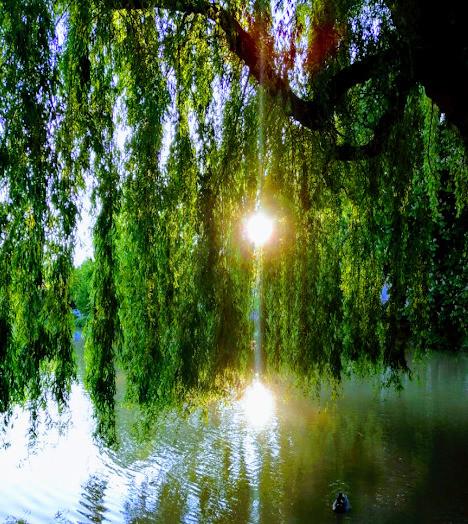 Lass Dein Licht strahlen- Im Fluss der Lebensenergie
