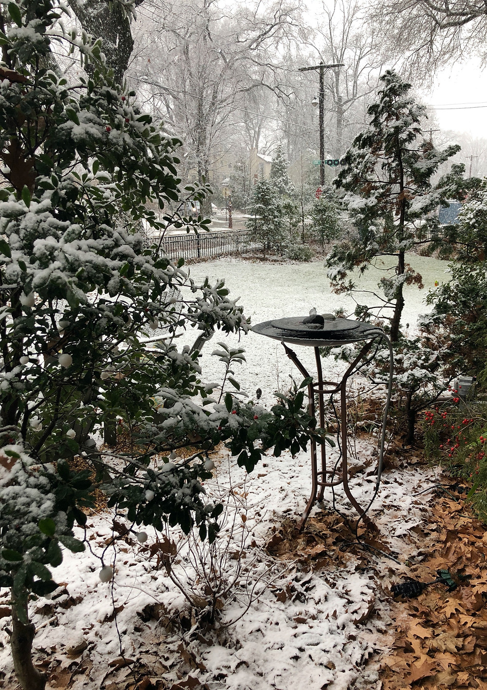 winter scene with native plants