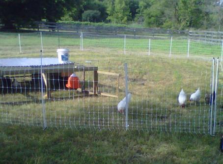 Our Journey into Farming (Part 1)