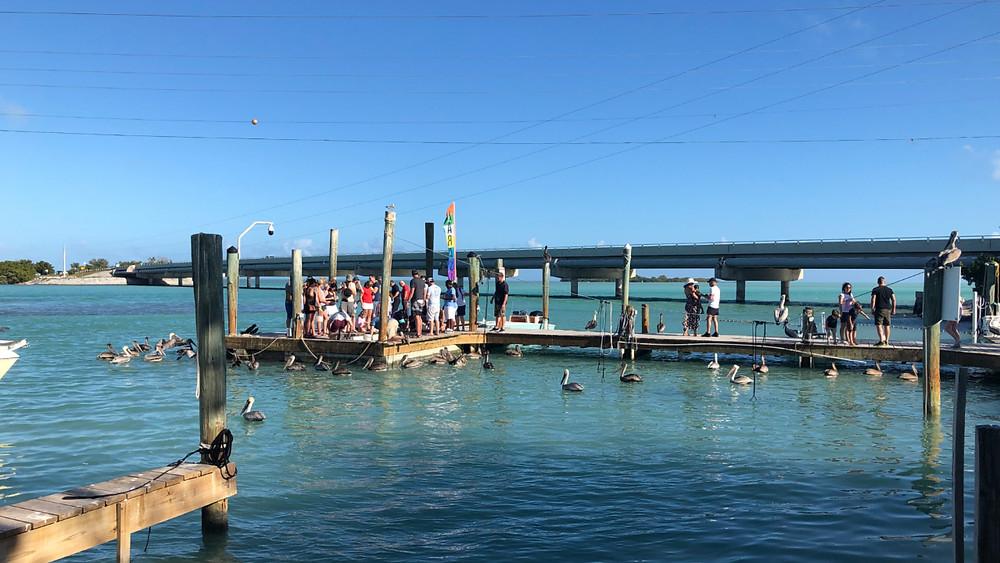 People feeding tarpon by hand off the dock at Robbie's of Islamorada in 2018