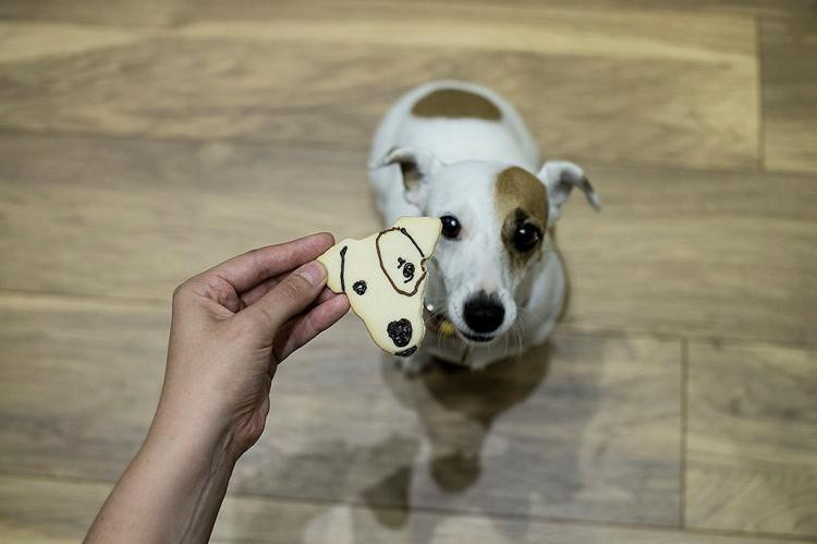 Keeping Your Dog's Attention