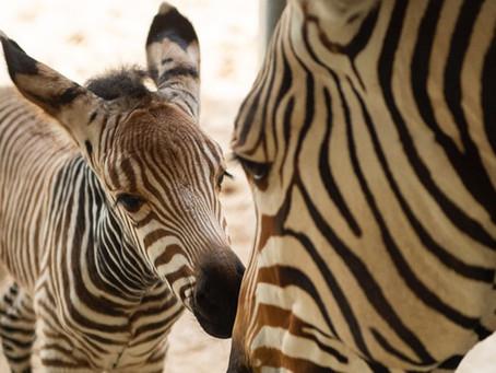 Disney's Animal Kingdom welcomes two baby animals as 2020 kicks off