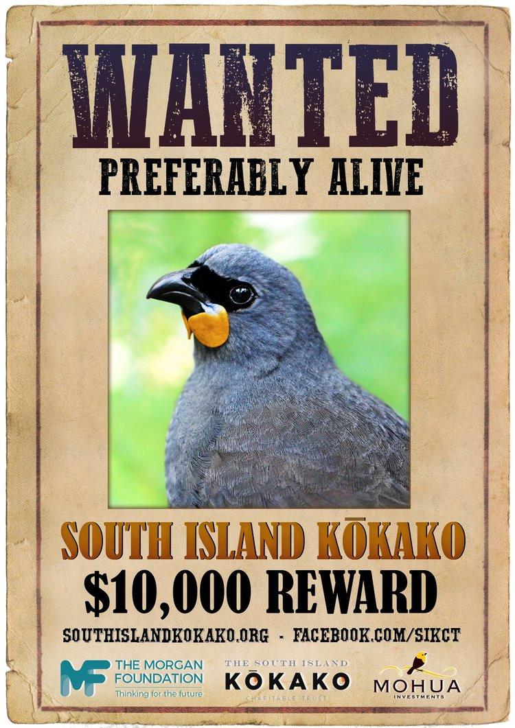kokako bird