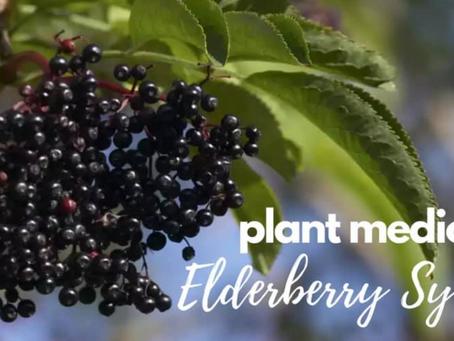 Plant Medicine - Elderberry Syrup