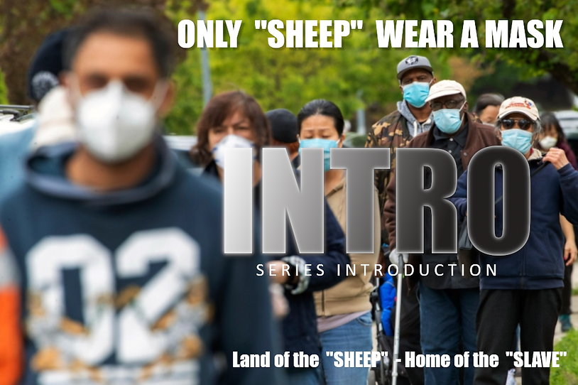 INTRO_image_only-sheep-wear-a-mask_with-