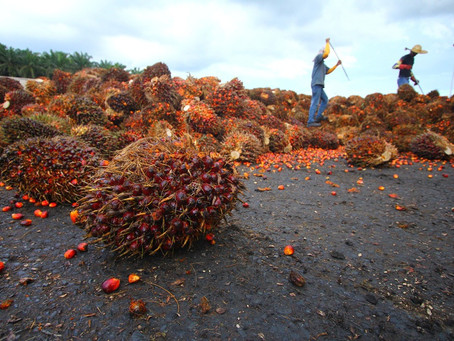 How Are Drones Used in Oil Palm Plantations